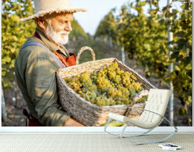 Portrait of a senior well-dressed winemaker with basket full of freshly picked up wine grapes, harvesting on the vineyard during a sunny evening