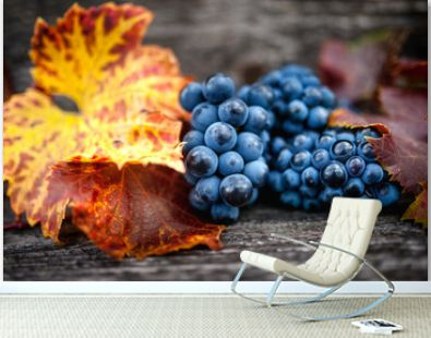 Autumn harvest at vineyard with fresh, bio red grapes