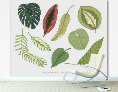 engraved, hand drawn tropical or exotic leaves isolated, leaf of different vintage looking plants. monstera and fern, palm with banana botany set