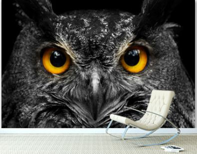 Black and white portrait owl with big yellow eyes