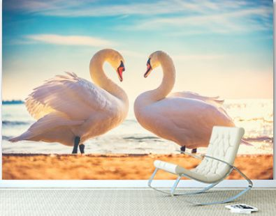 Sea sunrise swans couple in love. Heart shape love symbol from two white swans.