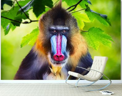 Portrait of a mandrill