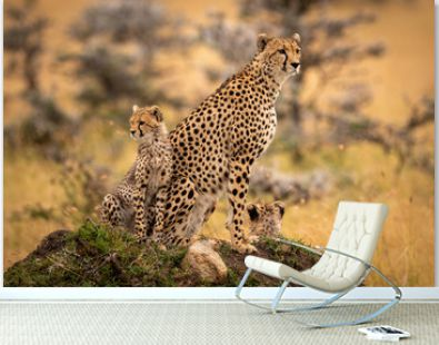Cheetah and cubs sitting on grassy mound