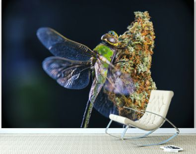 Macro detail of cannabis nugs and dragonfly isolated over black
