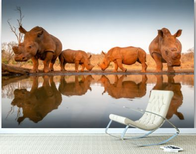 Two baby rhinos challenging each other at a pond