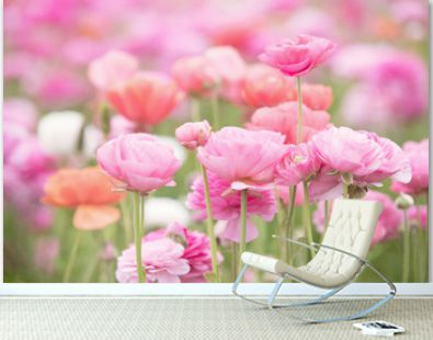 Photograph of a field of ranunculus in shades of pink