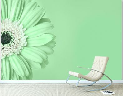 Closeup of trendy neo mint colored daisy flower with white center on green background with empty space. Year color trend concept. Toned image. Copy space.