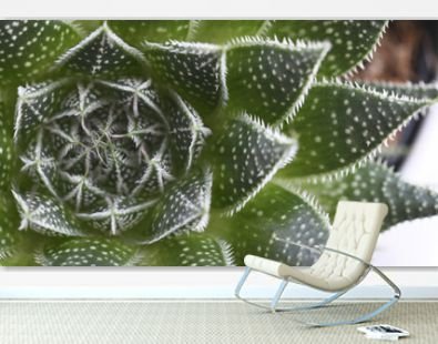 trendy succulent background
