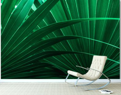tropical palm leaf and shadow, abstract natural green background, dark blue tone
