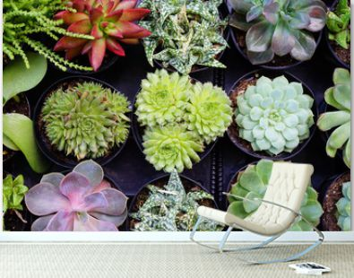 Small pots planted with a green succulent plant