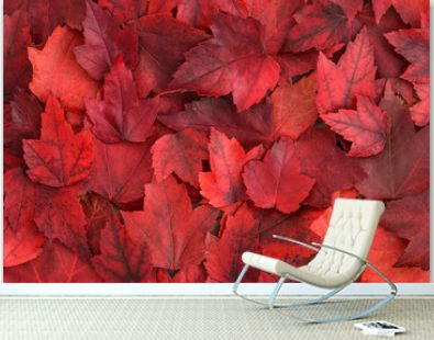 Background of red fall leaves