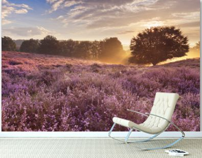Blooming heather at sunrise, Posbank, The Netherlands