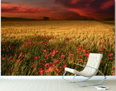 Dawn with a view on wheat field and poppies
