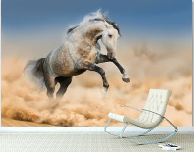 Grey horse jump in dust