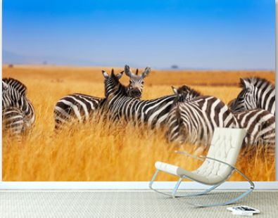 Zebra herd on the grasslands of Kenya, Africa