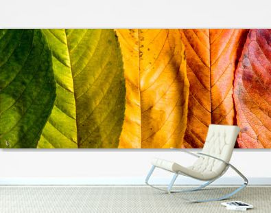 Autumn composition, colorful leaves in a row. Studio shot.