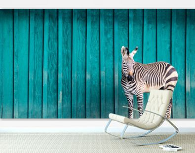 Zebra in Front of a Teal Wall