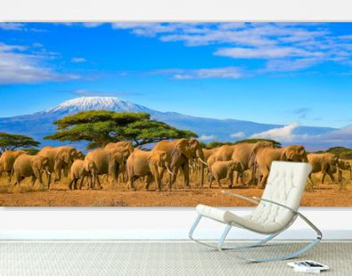 Herd of african elephants taken on a safari trip to Kenya with a snow capped Kilimanjaro mountain in Tanzania in the background, under a cloudy blue skies.