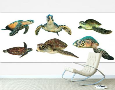 Turtles isolated. Green and Hawksbill Sea Turtle on white background
