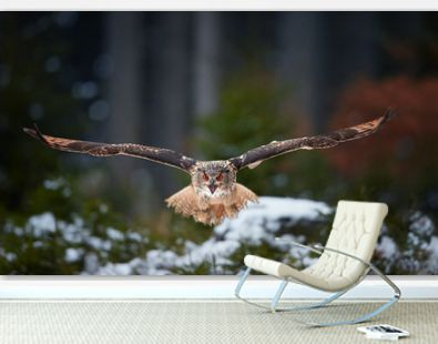 Eagle owl, Bubo bubo, giant owl flying directly at camera with fully outstretched wings and opened beak, against abstract winter background. Screaming owl with bright orange eyes in european forest.