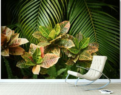 Tropical garden with palm tree, close up.