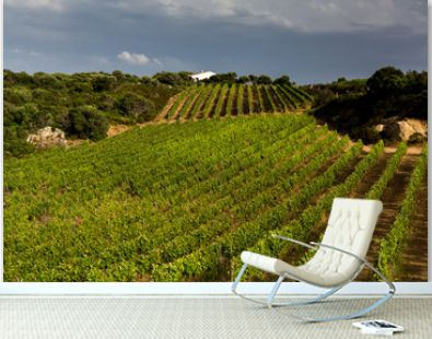 Landscape of vineyard, nature background. Landscape of hills with vineyards in Sardinia. Vineyard with rows of grapes growing under a blue sky