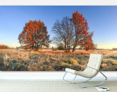 Scenic autumn landscape of colorful nature on october meadow with trees. Red foliage on tree and hoarfrost on grass. Fall. Amazing autumn in clear morning.