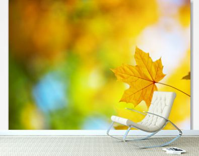 yellow maple leaves in autumn with beautiful sunlight. Autumnal foliage with blurry background