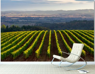 Looking over a view of an Oregon vineyard, lines of vines tipped by afternoon sun, a glow highlighting the distant valley backed by blue hills.