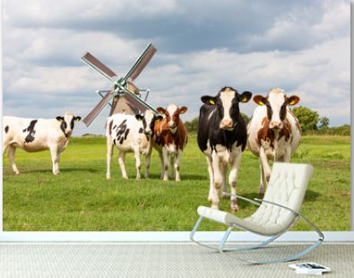 Cows in front of the Akkersloot windmill in Oud Ade in the Netherlands