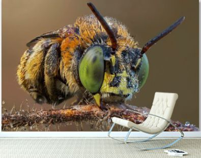 The extreme close up of bee macro photography