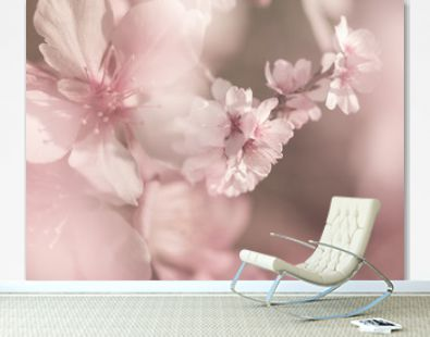 Cherry blossoms with pastel colors,spring in the nature