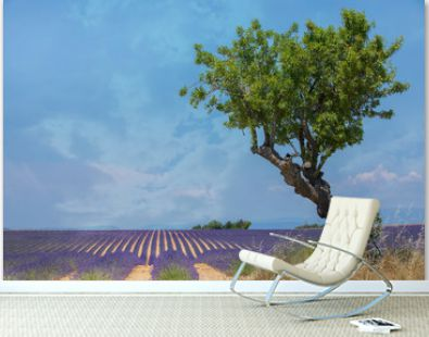 Lavender Field with Olive Tree and Copy Space