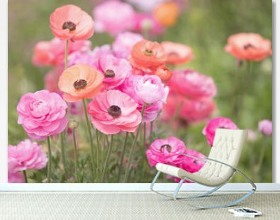 Original photograph of pink and coral colored Ranunculus growing in a field of flowers