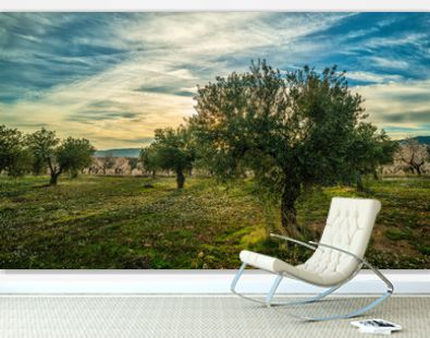 Picture on an olive trees and almond trees field during a sunny sunset in Spain - Image