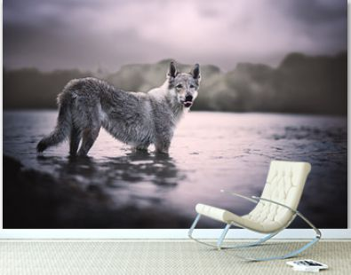 Wolfdog portrait in natural environment in a lake