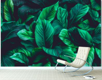 leaves of Spathiphyllum cannifolium, abstract green texture, nature dark  tone background, tropical leaf