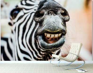 the smiling zebra