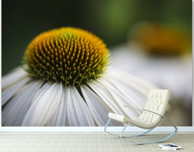 Macro image of the top of a white echinacea flower in a garden.