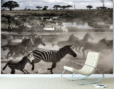 zebras in africa running