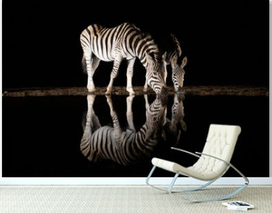 Two zebras drinking from a pool in the night