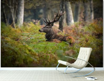 deer in french forest