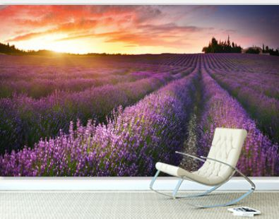 View of lavender field at sunrise in Provence, France