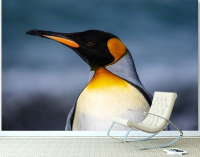 The king penguin, the second-largest penguin species, along the shores of South Georgia Island in the Southern Ocean