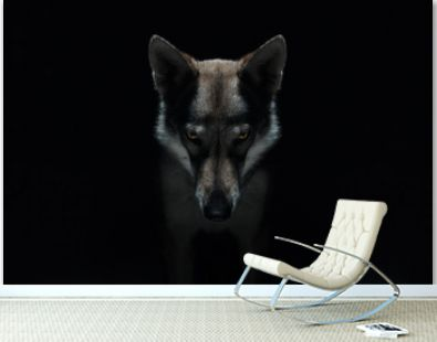 Wolf in different perspectives on dark blue background