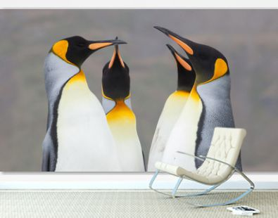 Beautiful King Penguins Looking All Around