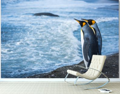 Two king penguins at waterline with seal