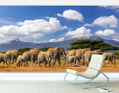 Mt Kilimanjaro Tanzania, large herd of elephants and snow capped mountain, taken on a safari trip in Kenya with cloudy blue sky. Africas highest point with largest land mammals savannah landscape.
