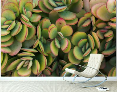 Beautiful all-over botanical floral pattern green yellow crassula jade succulents plants with red edges. Tropical nature background template