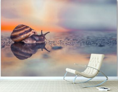 closeup of a brown grape snail. brown snail on the background of the sea sunset. snail on the sea. brown shell on the seashore. snail crawling along the seashore at sunset. snail against the setting s